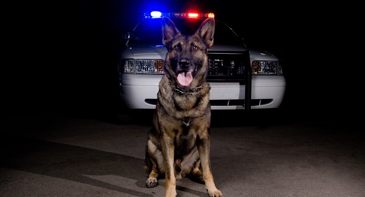 police dog case law summary & drug dogs legal resource